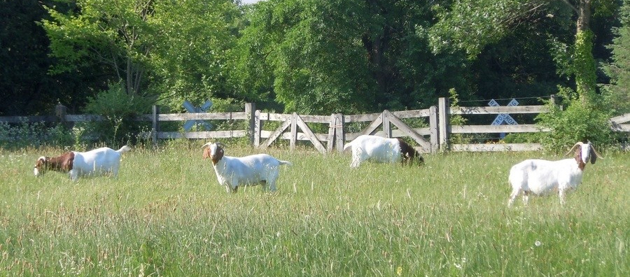 Front pasture does